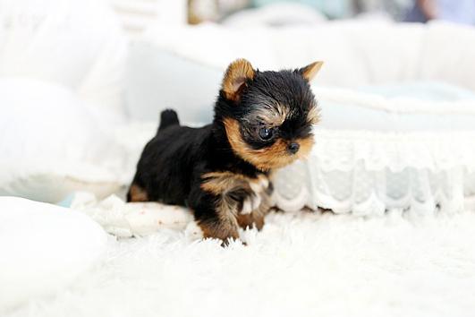 Princess Mini
