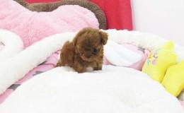 Winnie3