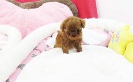 Winnie4